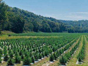 hemp fields at PHARM