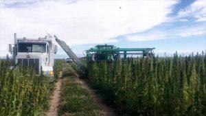 PHARM Harvesting CBD