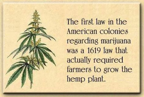hemp vs marijuana legalize