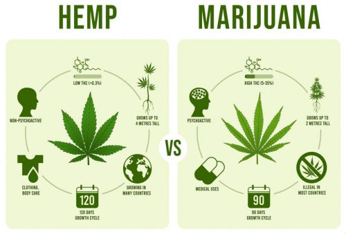 hemp vs marijuana