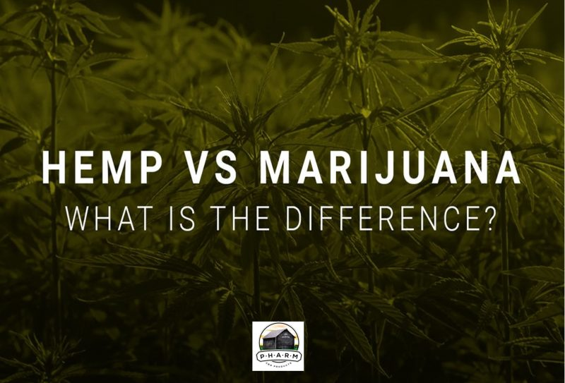 hemp vs marijuana debunking the myth