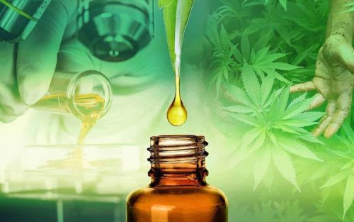 transforming hemp into CBD oil