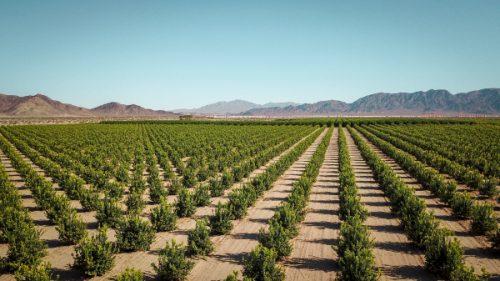 hemp farm in California